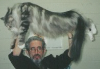 Silver Tabby With White Male